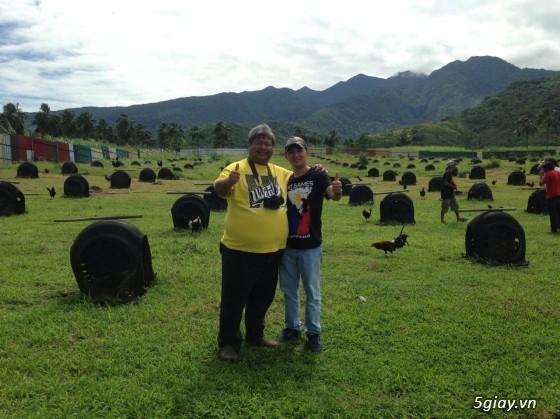 Trại gà Nguyễn Thiện - Nhập khẩu các giống gà đá trên Thế Giới - 27