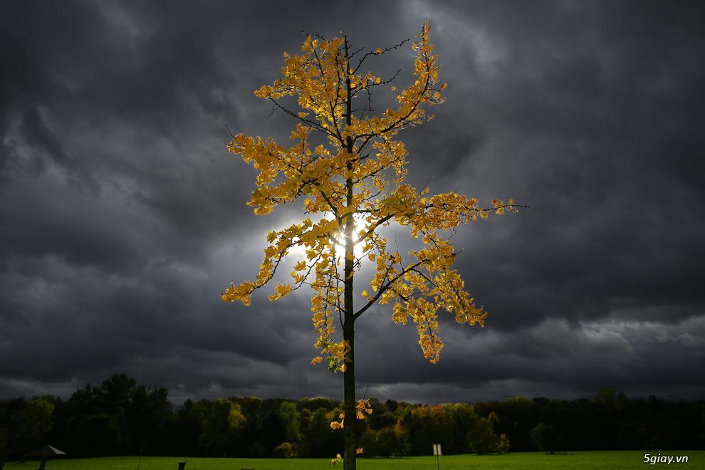 [The Big Picture] Ảnh đẹp mùa Thu trên thế giới năm 2013 - 5074