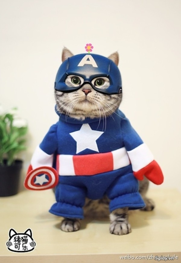 Gặp gỡ chú mèo cosplay siêu dễ thương đình đám tại Trung Quốc ...