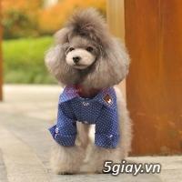 Chuyên bán chó poodle tiny HCM - 10