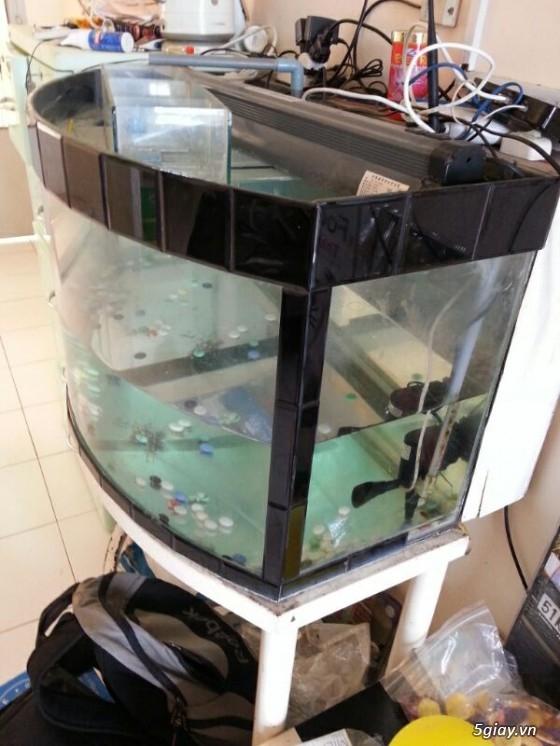 Thanh lý hồ cá cũ giá 500k có fix - 1