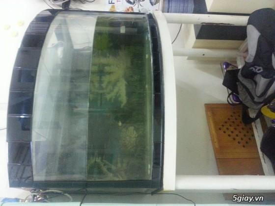 Thanh lý hồ cá cũ giá 500k có fix