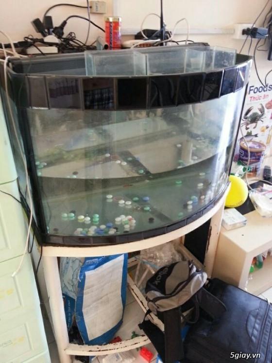 Thanh lý hồ cá cũ giá 500k có fix - 2