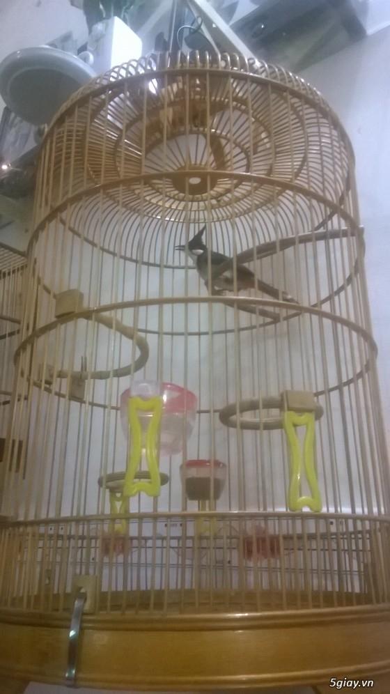4 chú chim sẵn sàng ra đi - 3