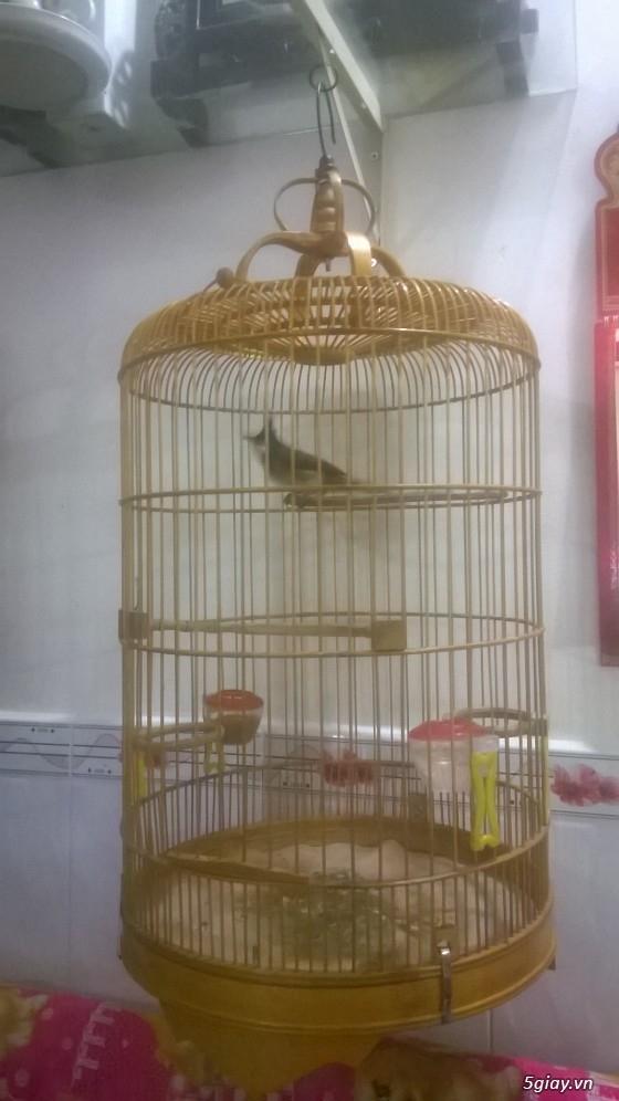 4 chú chim sẵn sàng ra đi - 2