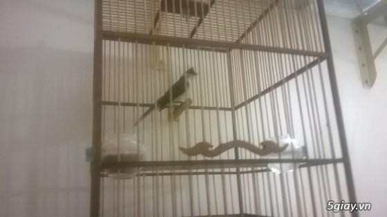 4 chú chim sẵn sàng ra đi - 4