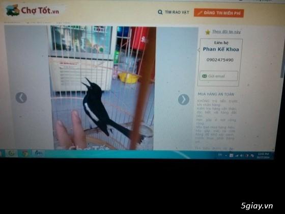 cảnh báo bán chim lừa đảo ( mod cho em vài ngày nha)