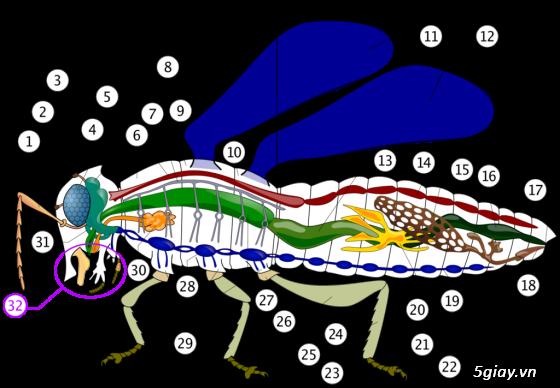 Diệt Mối, Phòng Mối, Diệt Côn Trùng ( ruồi, muỗi, kiến, gián.........)