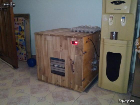 Gà serama & máy ấp trứng fox 1004   ............. - 10