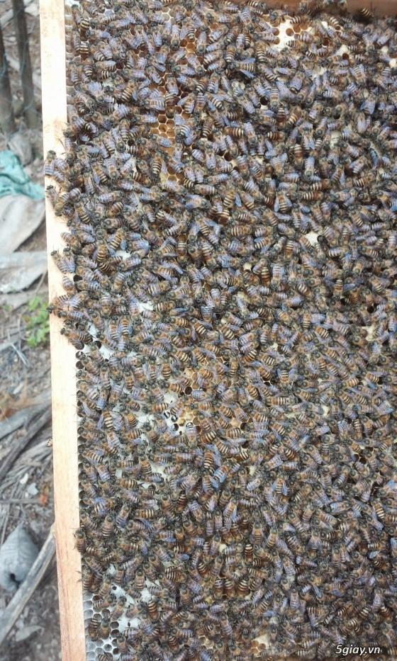 Bán ong mật giống và dụng cụ nuôi ong - 1