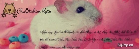 Chuộtnhím Kute - Chuyên bán hamster, nhím kiểng, chuột nhảy và sóc cảnh...