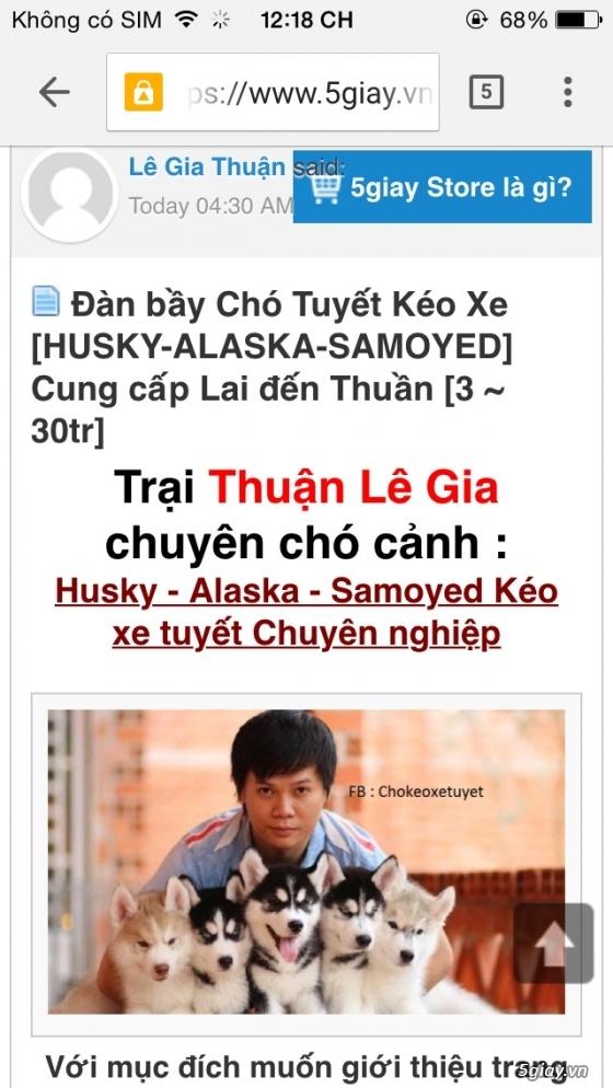 Cảnh báo mua chó Thuận Lê Gia lừa đảo