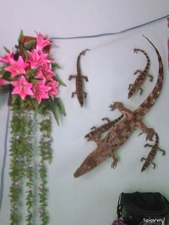 cá sấu nhồi bông da thật nguyên con
