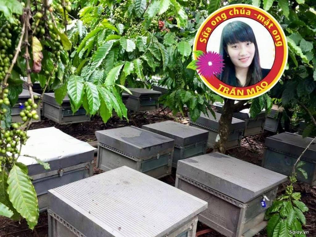 THÔNG BÁO TUYỂN ĐẠI LÝ PHÂN PHỐI SỮA ONG CHÚA - MẬT ONG TRẦN MAO TRÊN TOÀN QUỐC - 2