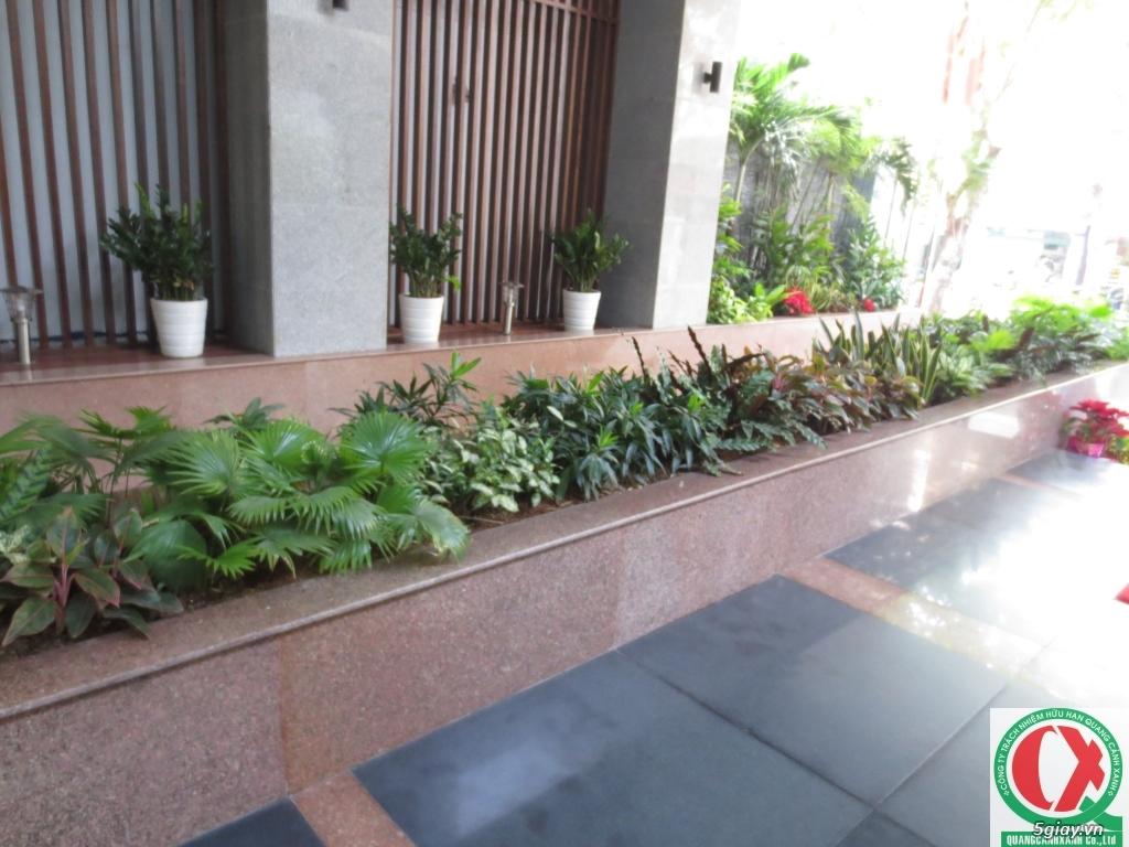 Dịch vụ làm vườn, thi công thiết kế duy trình cảnh quan sân vườn 3
