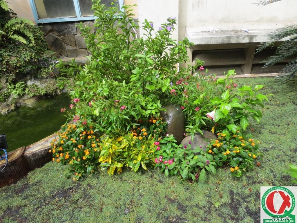 Dịch vụ làm vườn, thi công thiết kế duy trình cảnh quan sân vườn 4