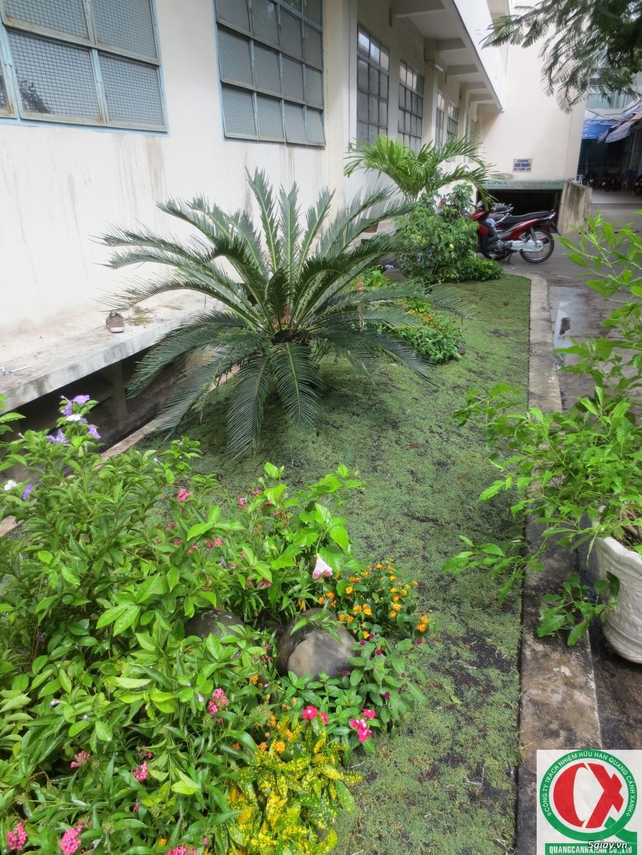 Dịch vụ làm vườn, thi công thiết kế duy trình cảnh quan sân vườn 6