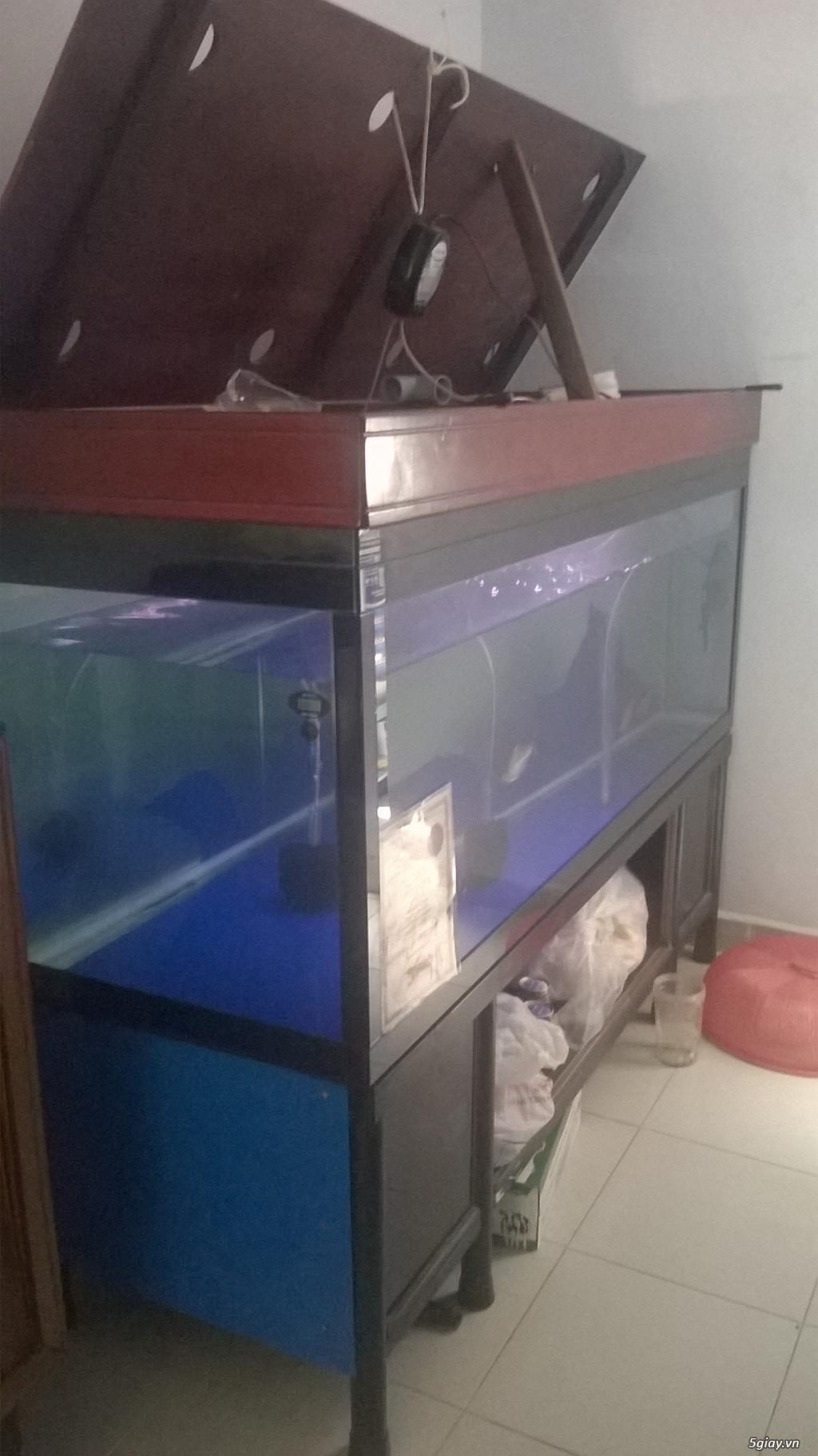 Hồ cá 1m8 .kính 12 li - 1