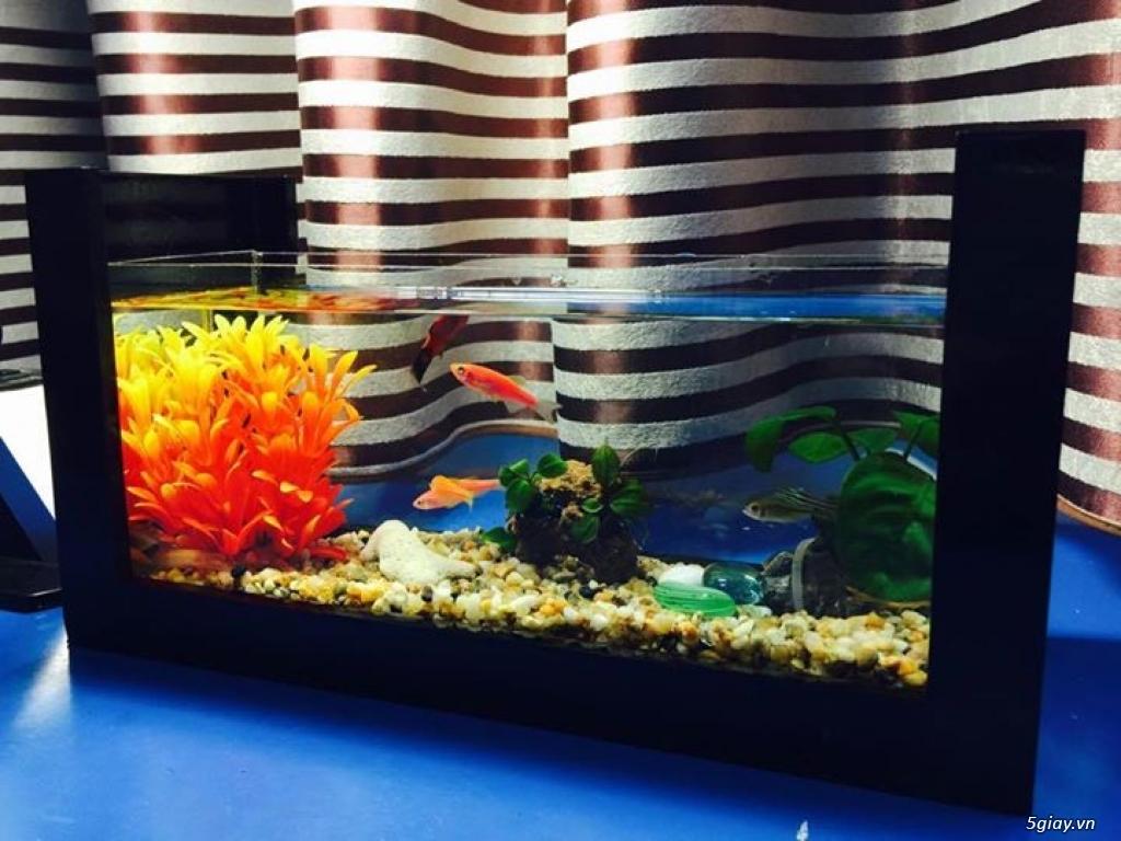 Bể cá mini - bể thủy sinh mini tuyệt đẹp cho bàn làm việc và thư giãn - 13