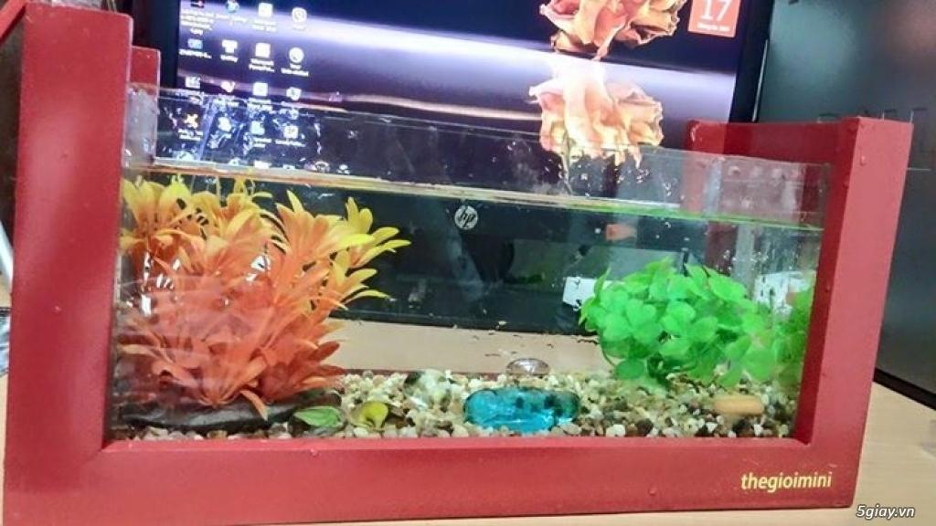 Bể cá mini - bể thủy sinh mini tuyệt đẹp cho bàn làm việc và thư giãn - 9