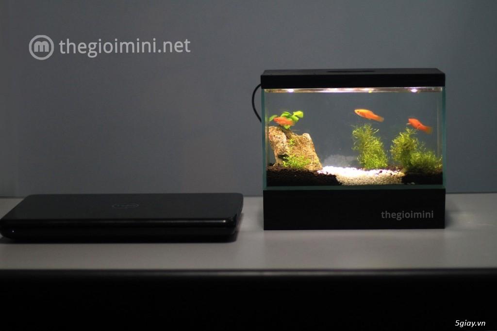Bể cá mini - bể thủy sinh mini tuyệt đẹp cho bàn làm việc và thư giãn - 6