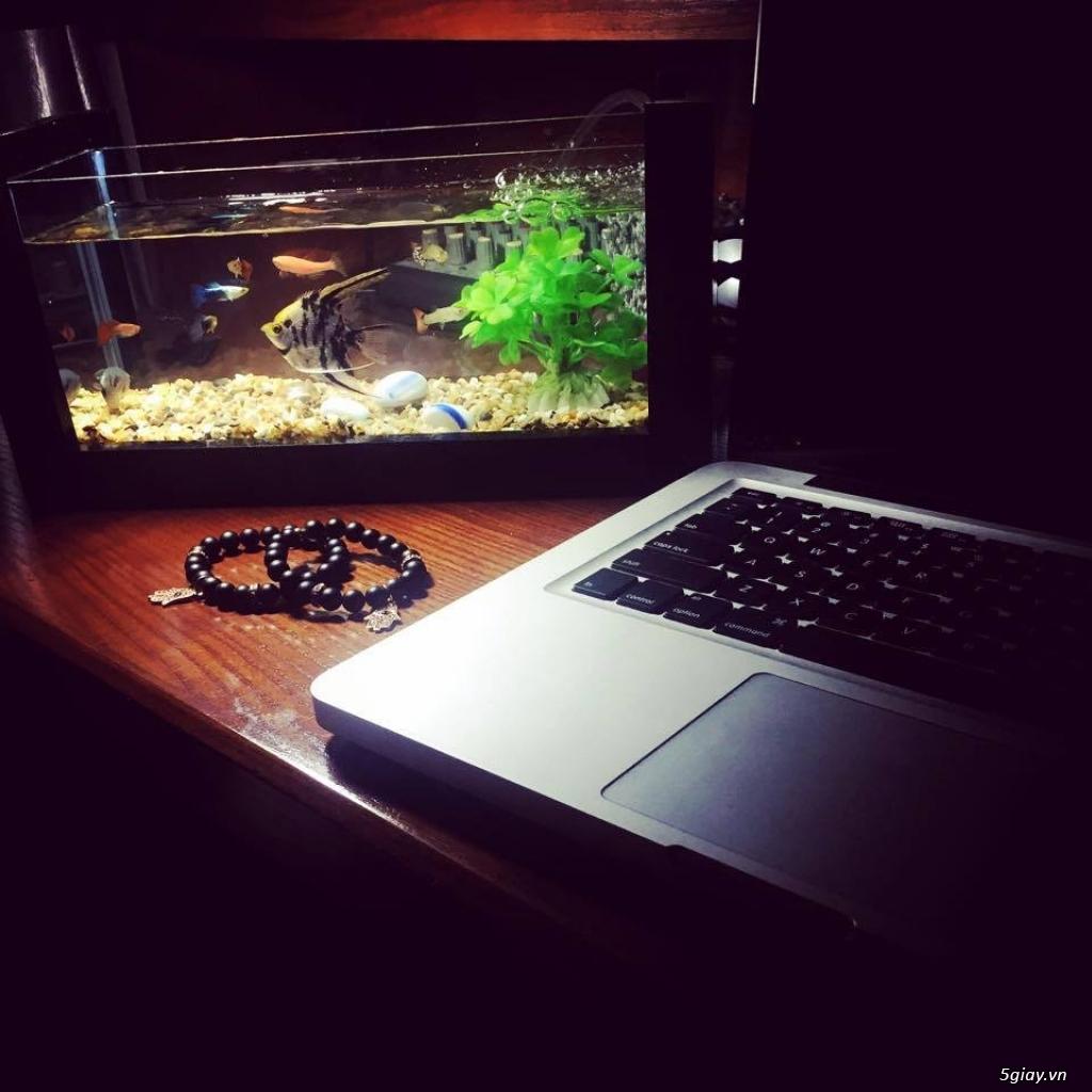 Bể cá mini - bể thủy sinh mini tuyệt đẹp cho bàn làm việc và thư giãn - 15