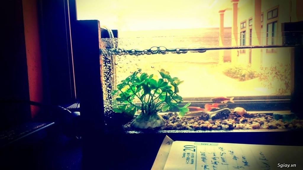 Bể cá mini - bể thủy sinh mini tuyệt đẹp cho bàn làm việc và thư giãn - 12