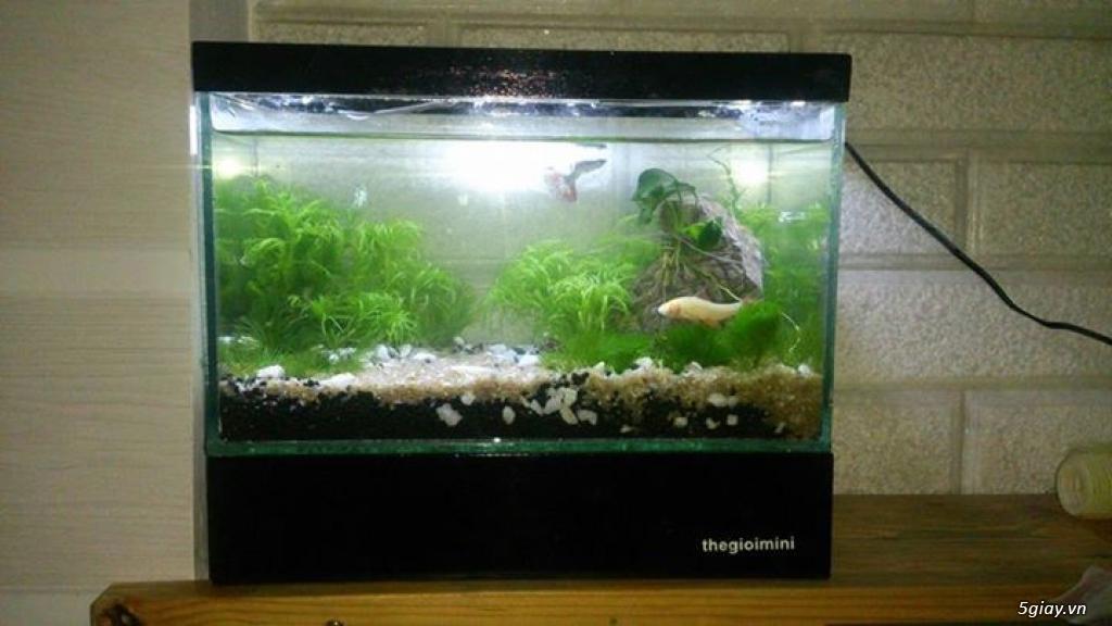 Bể cá mini - bể thủy sinh mini tuyệt đẹp cho bàn làm việc và thư giãn - 11