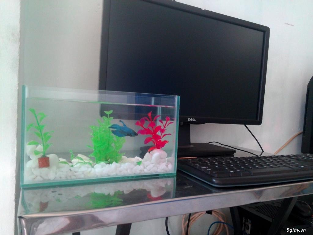 Bể cá mini xinh xắn để bàn làm việc phòng khách quà tặng đẹp giá rẻ