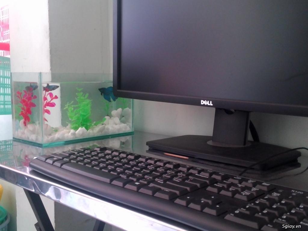 Bể cá mini xinh xắn để bàn làm việc phòng khách quà tặng đẹp giá rẻ - 1