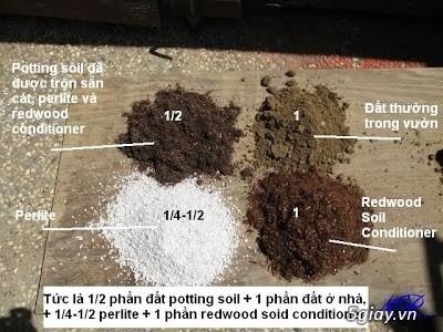 Chuyên Perlite làm xốp đất dùng cho cậy hoa hồng leo - 1