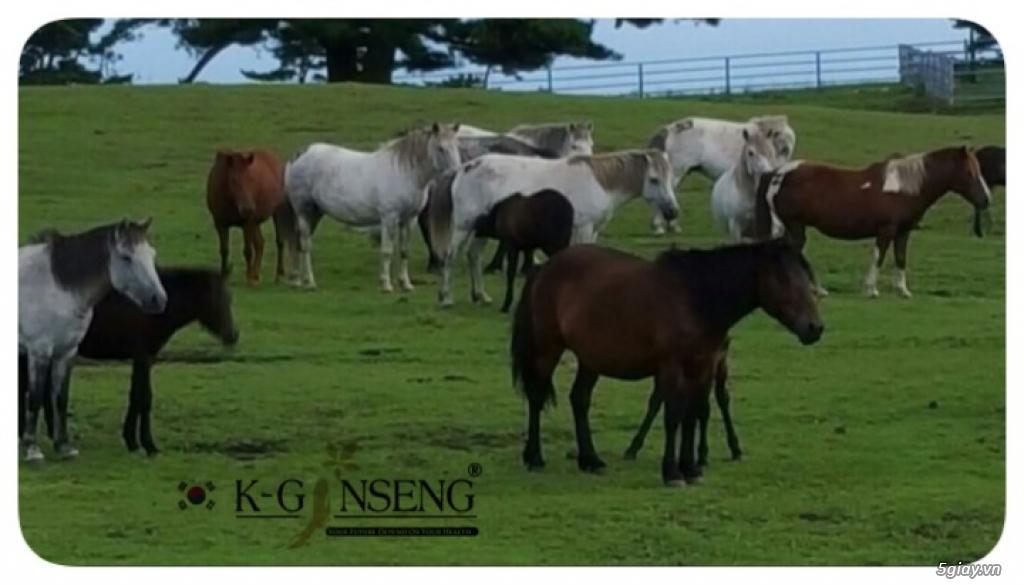 Cao Xương Ngựa Hàn Quốc - Giúp Chắc Xương Bổ Khớp - 2