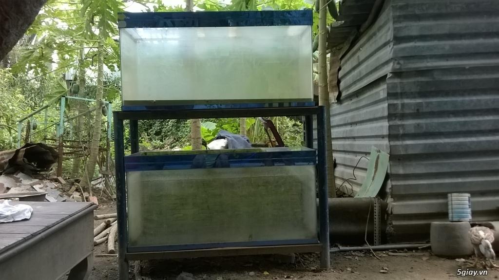 Bán 2 hồ cá,khung và phụ kiện... - 1