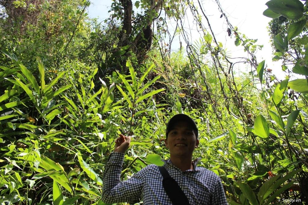 Mật ong rừng Kon Tum 100% Nguyên Chất - 2