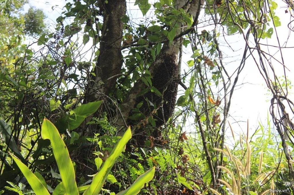 Mật ong rừng Kon Tum 100% Nguyên Chất - 3