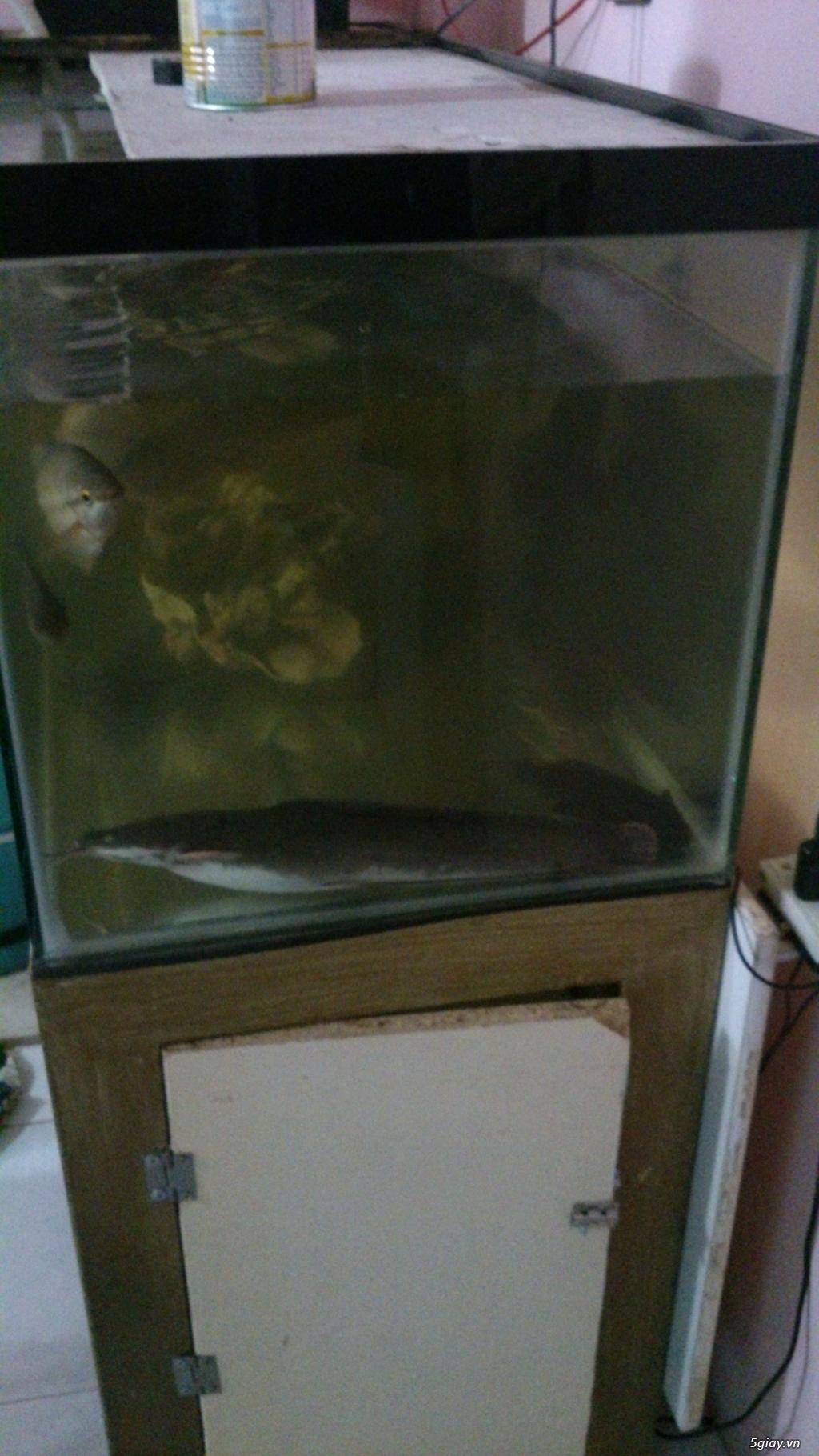 Hồ cá lớn 2 tầng đây bà con!!! - 2