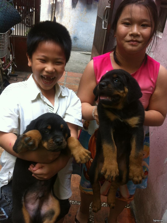 Chó Rottweiler 2 tháng tuổi QUận 3