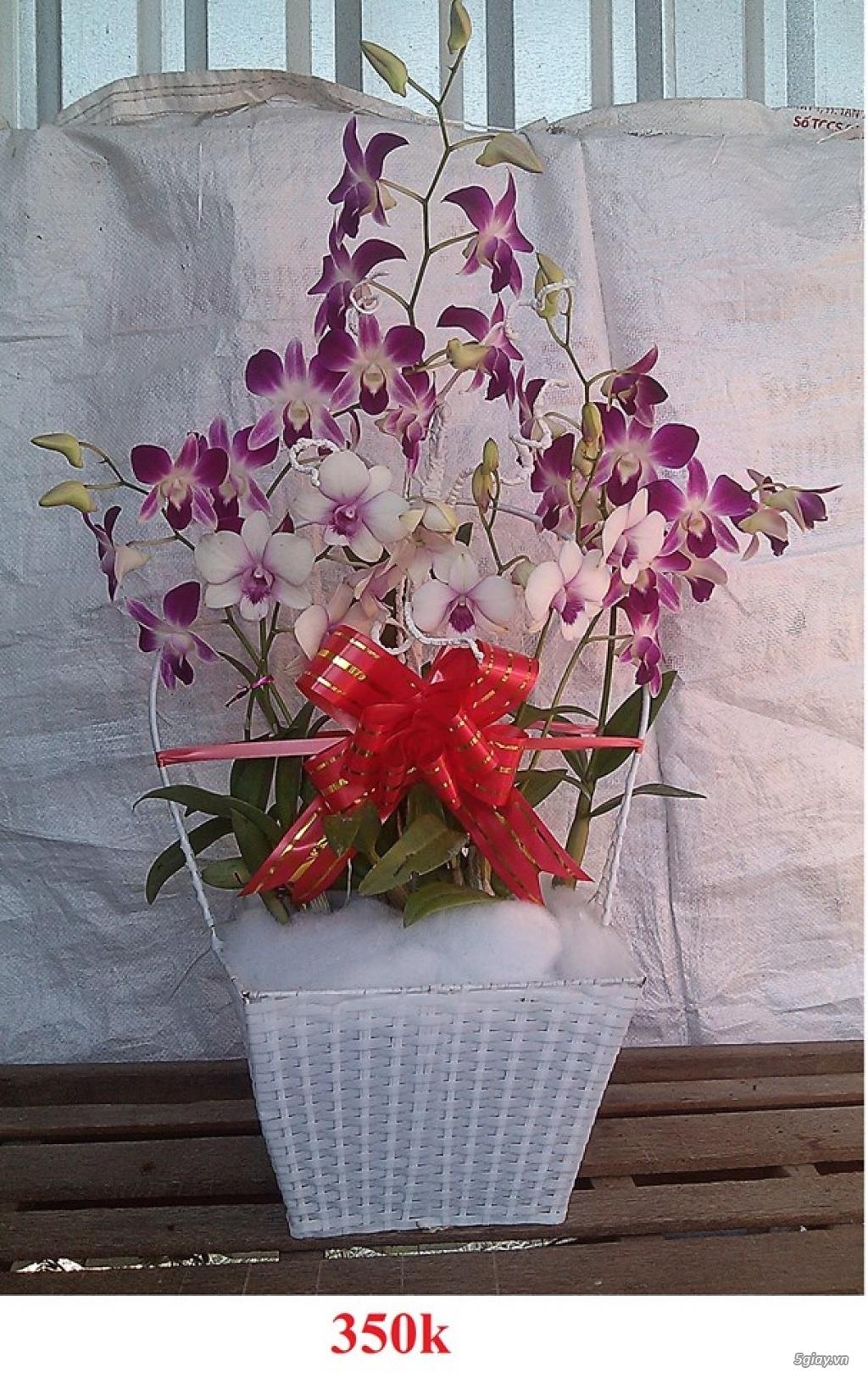Giỏ hoa phong lan tết 2016 - 2