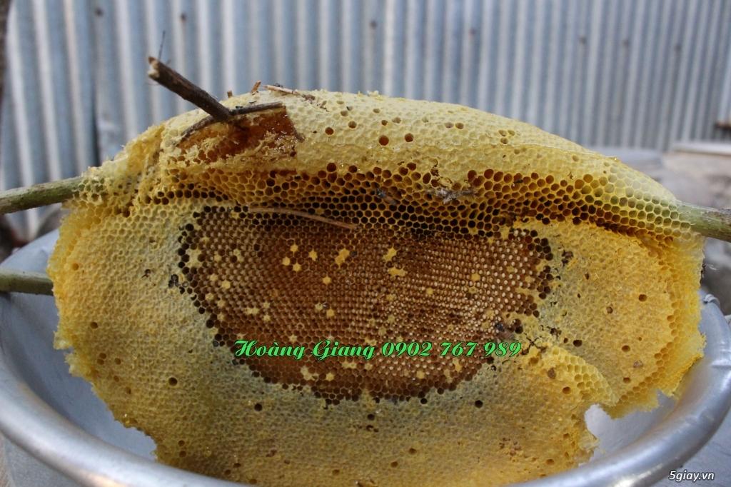 Mật Ong Rừng Nguyên Chất 100% - Ong Ruồi - 5