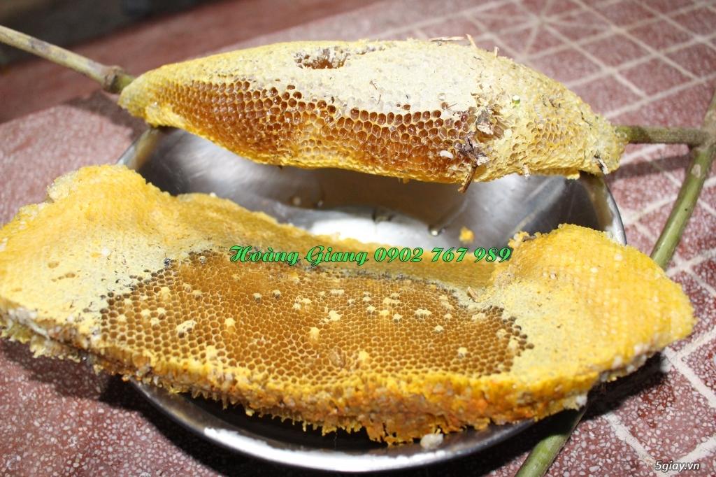 Mật Ong Rừng Nguyên Chất 100% - Ong Ruồi - 6