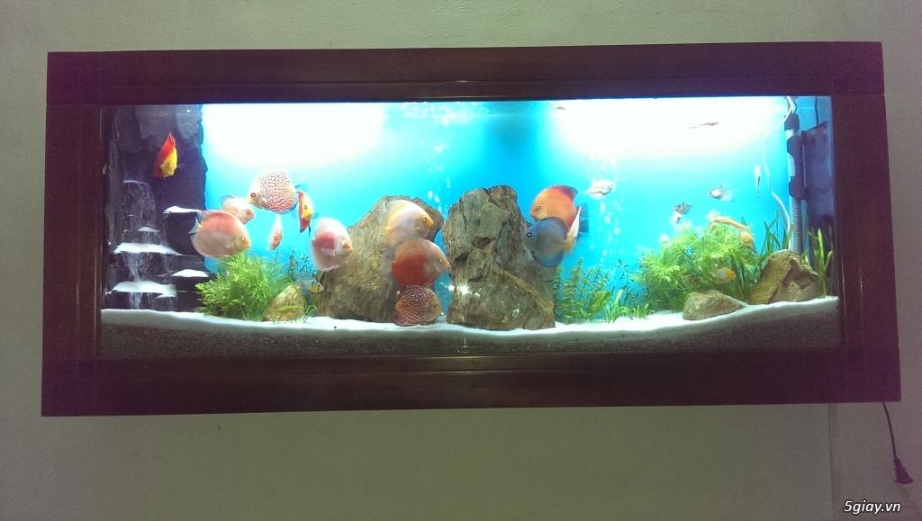 Hồ cá treo tường - 2
