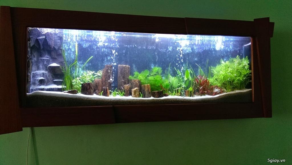 Hồ cá treo tường - 4