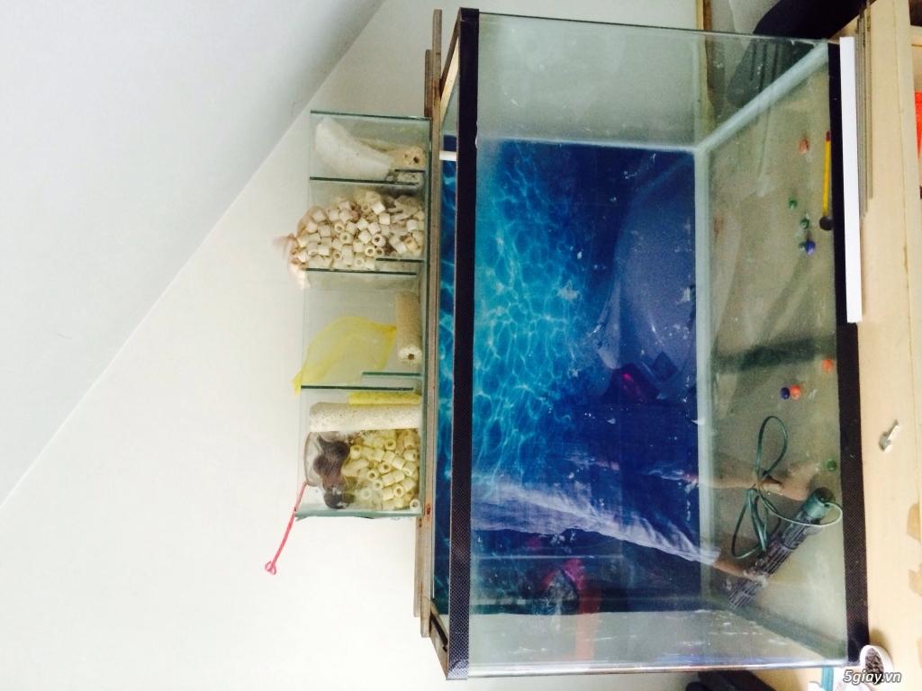 Bán hồ cá kính đúc 8 ly tặng cây sưởi