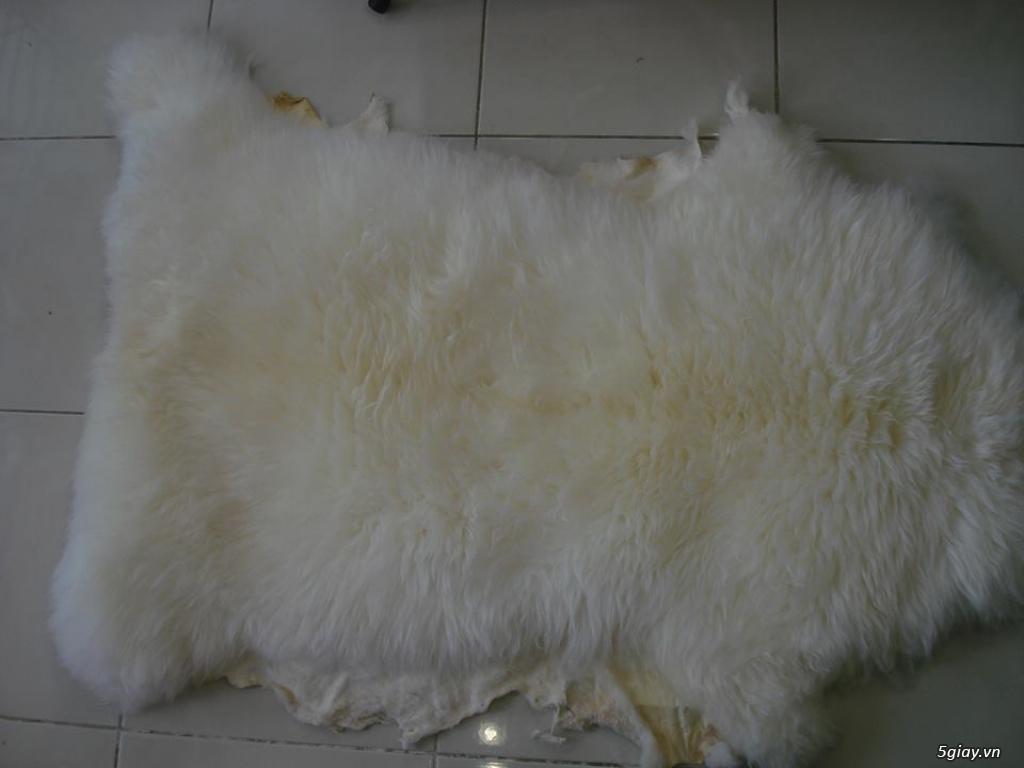 Lông cừu phật sơn (tq) - 3