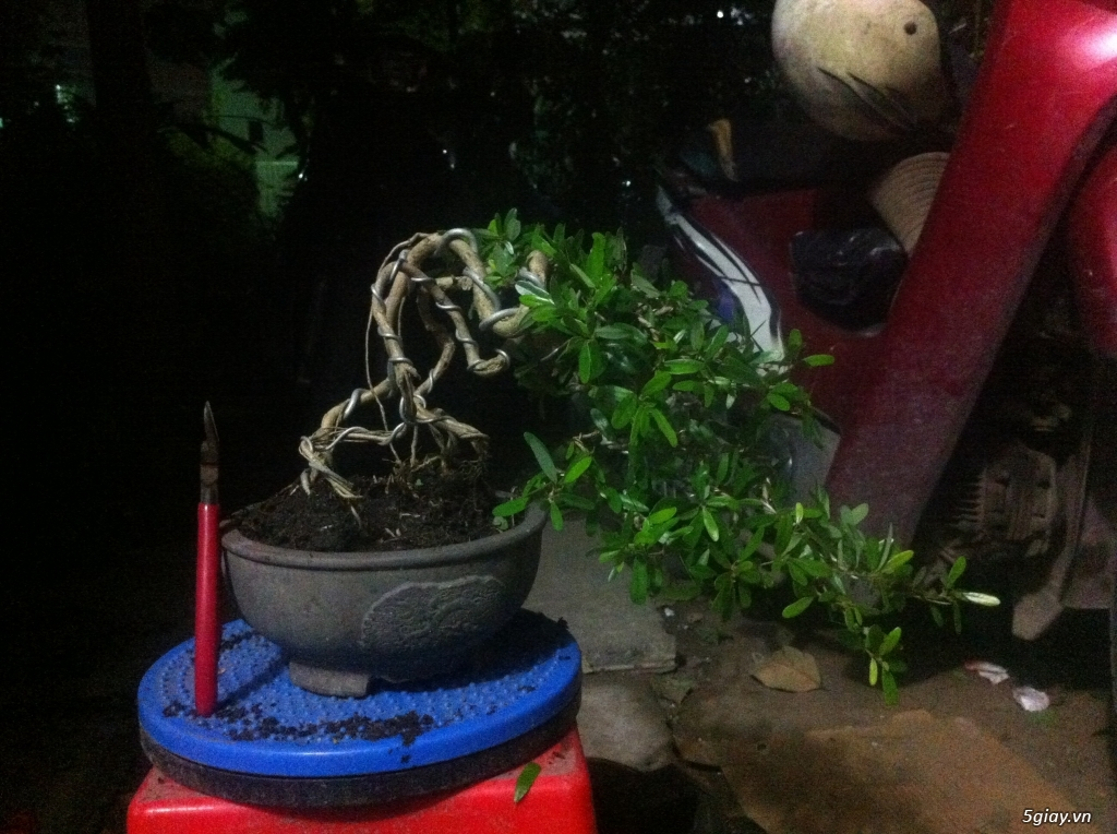 cây bonsai và vài món đồ chơi cho bonsai