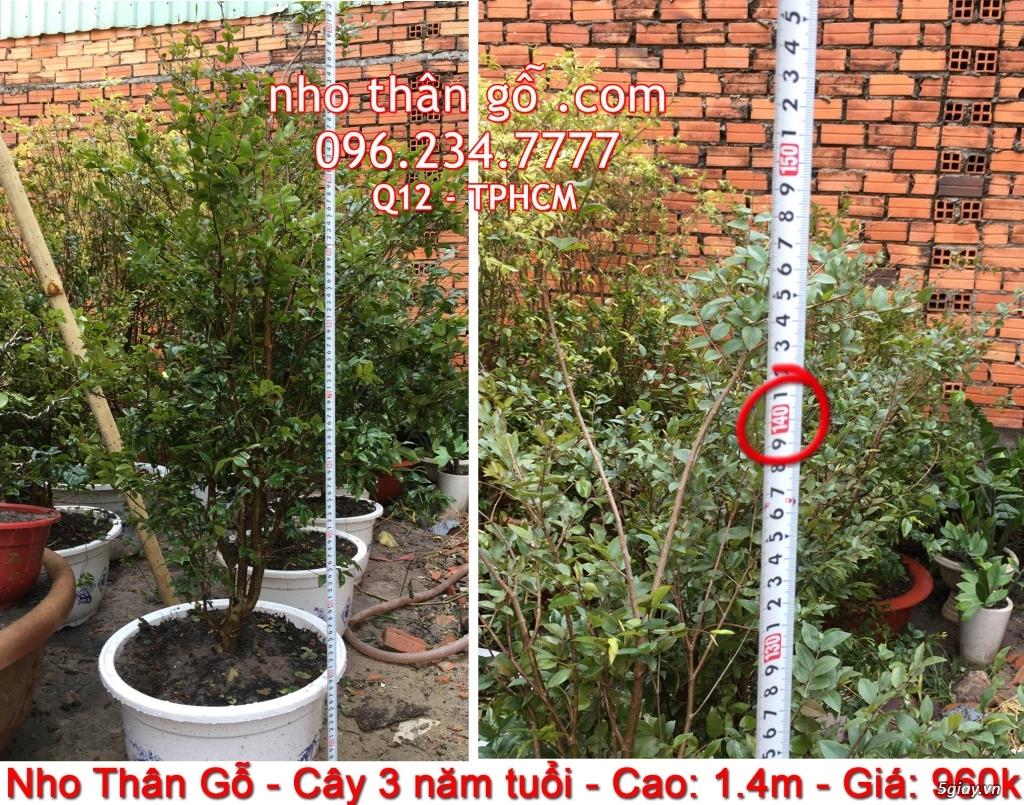 Mua bán cây Nho Thân Gỗ TPHCM - 4