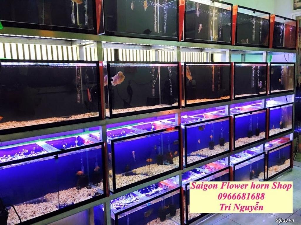 Cá La Hán: Thái Đỏ,King KamFa, King Việt, King Lai, Kim Cương, RedTexas - 16