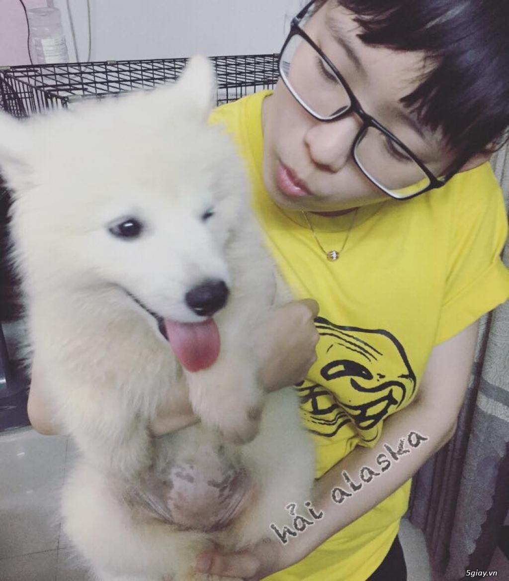 Chuyên bán và nhận oder các giống chó husky,alaska,samoyed..update thường xuyên !!! - 15