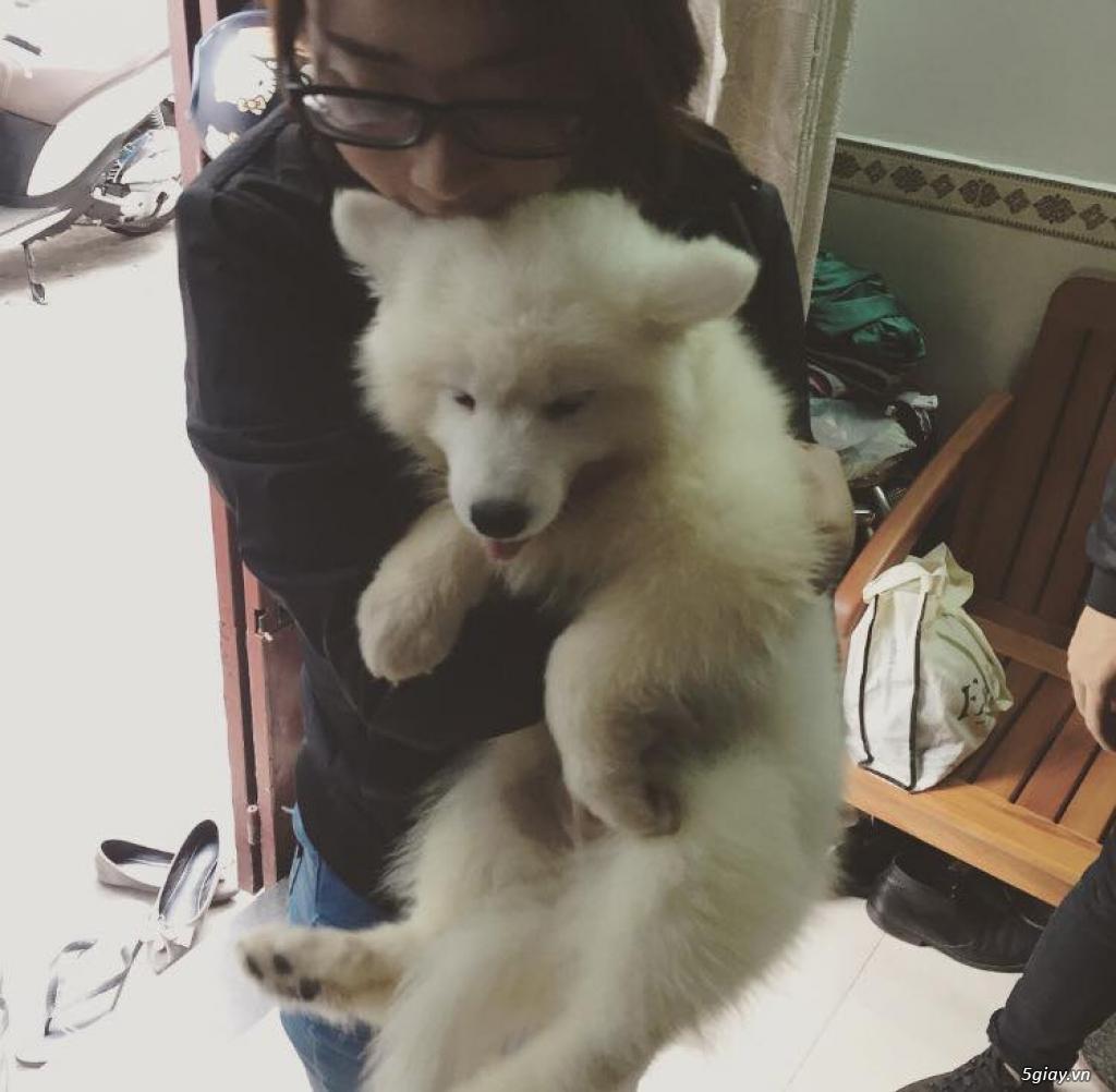 Chuyên bán và nhận oder các giống chó husky,alaska,samoyed..update thường xuyên !!! - 11