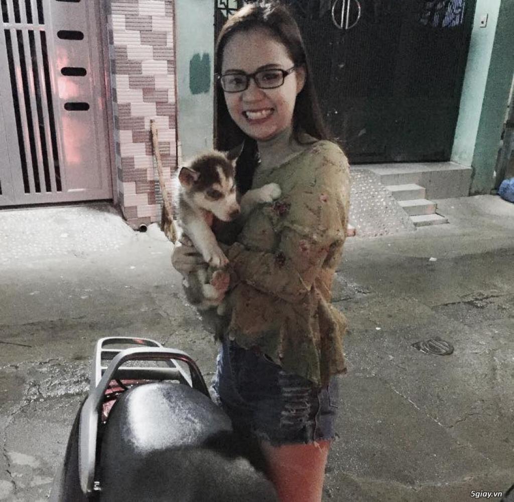 Chuyên bán và nhận oder các giống chó husky,alaska,samoyed..update thường xuyên !!! - 21